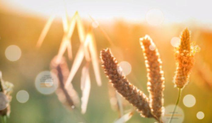 Aplicaciones que ayudan a controlar la alergia al polen